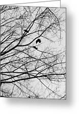 Blackened Birds Greeting Card