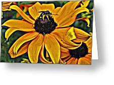 Blackeyed Susan With Bee Greeting Card