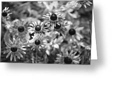 Blackeyed Susans In Black And White Greeting Card