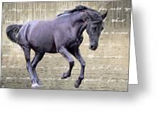 Blackhorse Poetry Greeting Card