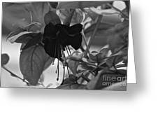 Blackie Fushia Greeting Card