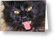 Blackie Greeting Card