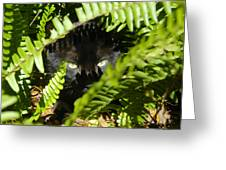 Blackie In The Ferns Greeting Card