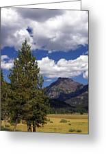 Blacktail Plateau Vertical Greeting Card