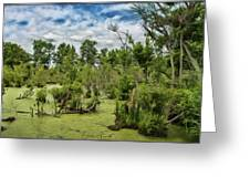 Blackwater Swamp Greeting Card