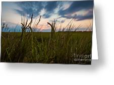Blades Of Sunset Greeting Card