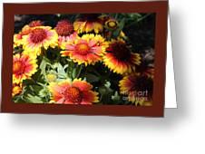 Blanket Flowers Greeting Card