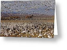 Blast Off Bosque Del Apache Greeting Card