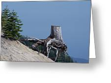 Blasted Stump  Greeting Card