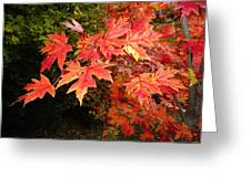 Blaze Greeting Card by Terry  Wiley