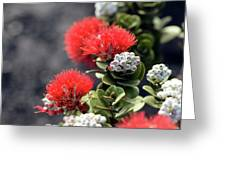 Blazing Blooms Of Ohia Flowers Greeting Card
