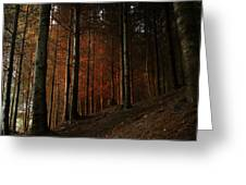 Blazing Forest Greeting Card