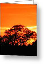 Blazing Oak Tree Greeting Card