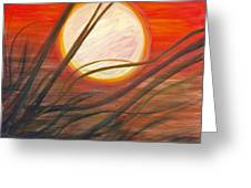 Blazing Sun And Wind-blown Grasses Greeting Card