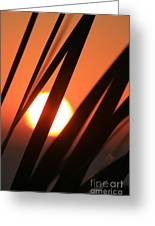 Blazing Sunset And Grasses Greeting Card
