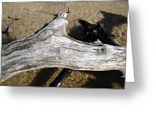 Bleached Driftwood Greeting Card