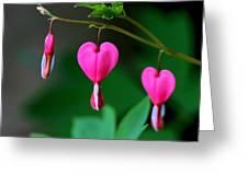 Bleeding Heart 2 Greeting Card