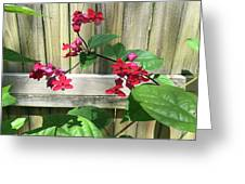 Bleeding Heart Clerodendrum 2 Greeting Card