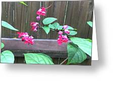 Bleeding Heart Clerodendrum Greeting Card