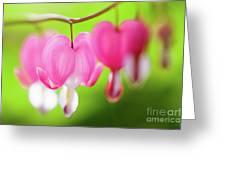 Bleeding Heart Flower Greeting Card