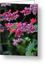 Bleeding Heart Vine Greeting Card