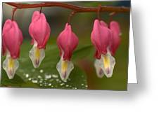Bleeding Hearts Greeting Card by Scott Gould