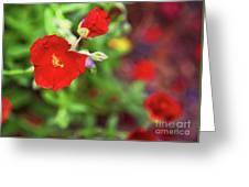 Bleeding Spring 3 Greeting Card
