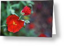 Bleeding Spring Greeting Card
