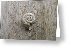 Blended Shell Greeting Card