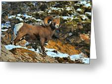 Blending In In Jasper Greeting Card
