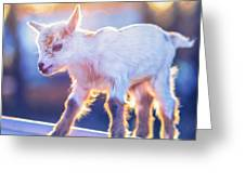 Little Baby Goat Sunset Greeting Card
