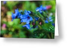 Bleu Greeting Card
