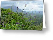Blissful Purple Greeting Card
