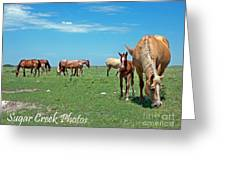 Blondes, Brunettes And Redheads Greeting Card