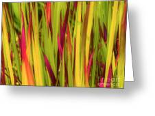 Blood Grass Greeting Card