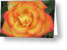 Blood Orange Rose Greeting Card