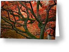 Blood Red Autumn Tree Greeting Card