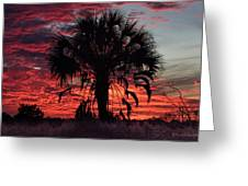 Blood Red Sunset Palm Greeting Card