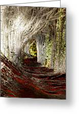 Blood Redwoods Greeting Card