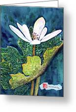 Blood Root Greeting Card