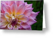 Bloom Greeting Card