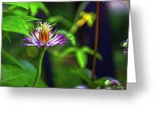 Bloom N Bud  Greeting Card