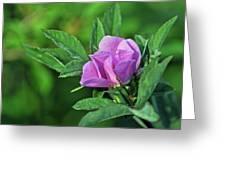 Bloomin Greeting Card