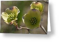 Bloomin' Greeting Card