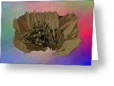 Blooming 2 Greeting Card