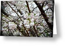 Blooming Apple Blossoms Greeting Card by Eva Thomas