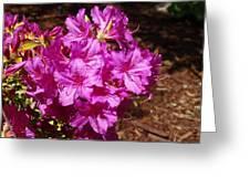 Blooming Azaleas Greeting Card
