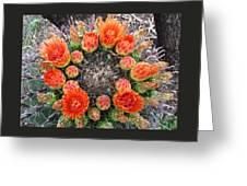 Blooming Barrel Cactus Greeting Card