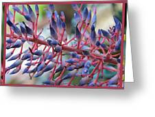 Blooming Bromeliads Collage Greeting Card