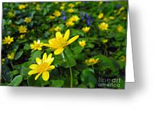 Blooming Buttercups. Greeting Card